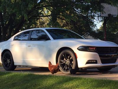 2017 Dodge Charger lease in Sandusky,OH - Swapalease.com